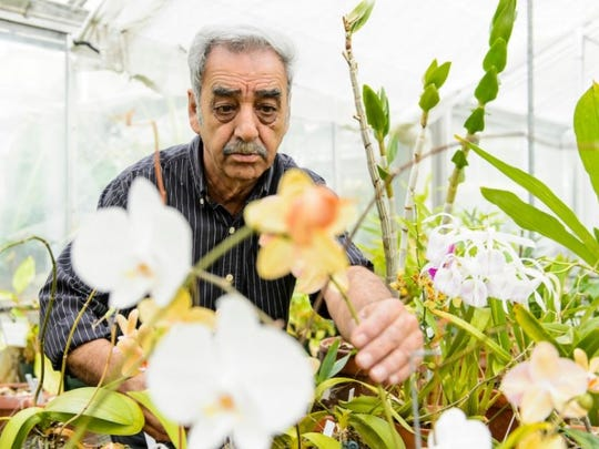 Mohammad (Mo) Fayyaz, distinguished faculty associate and director of the UW-Botany Greenhouses and Botanical Garden, works in the Botany Greenhouse in Birge Hall.