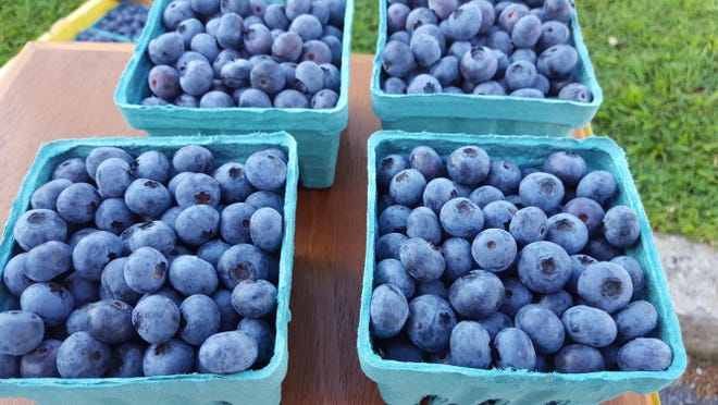 North Carolina ranks sixth in the nation for blueberry production with approximately 46 million pounds of blueberries picked and sold statewide.