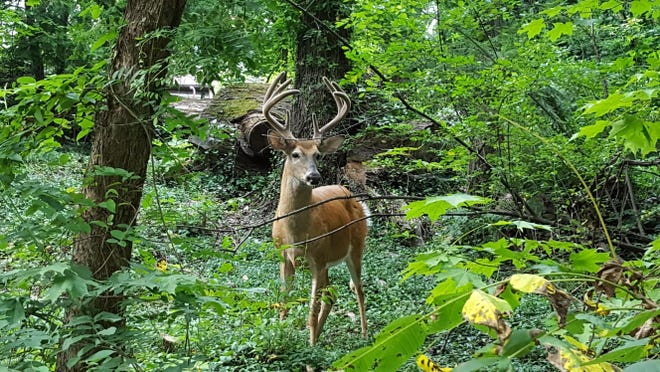 The Michigan Department of Natural Resources has released its annual deer hunting preview, indicating a mild winter has produced a robust deer population in the state.