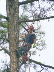 Jason Swanner can manage a smile secured high in a pine tree. Tree trimming is big business in Ruidoso, a village surrounded by federal forest land and considered at high risk for wildfire.