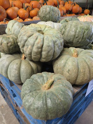 Jarrahdale pumpkins are pictured at Bailey's Produce and Nursery in Pensacola.