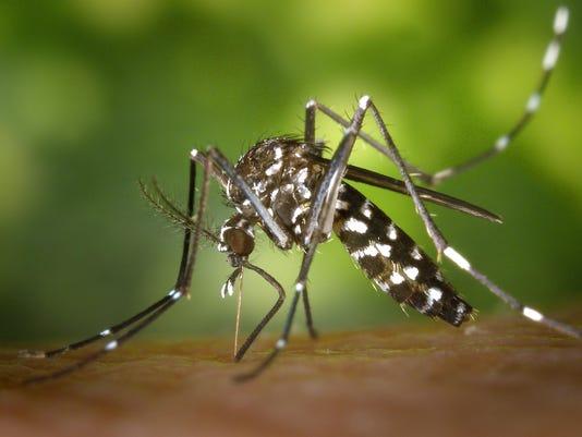 636081668787008761-ASBBrd-08-23-2016-PressMon-1-D005--2016-08-22-IMG-IMG-Aedes-albopictus-1-1-65FF2GA5-L867925366-IMG-IMG-Aedes-albopictus-1-1-65FF2GA5.jpg