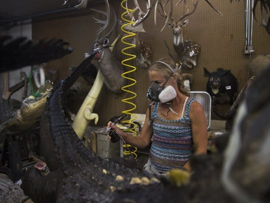 Lauren Carlyle, 51, of Naples, colors the skin of an alligator trophy at Skin and Scales Taxidermy on June 28, 2016 in Naples, Florida. Busy year-round with various specialty services for animal trophies, the full service taxidermy shop is currently working on over 250 different alligator trophies. (Nicole Raucheisen/Staff)
