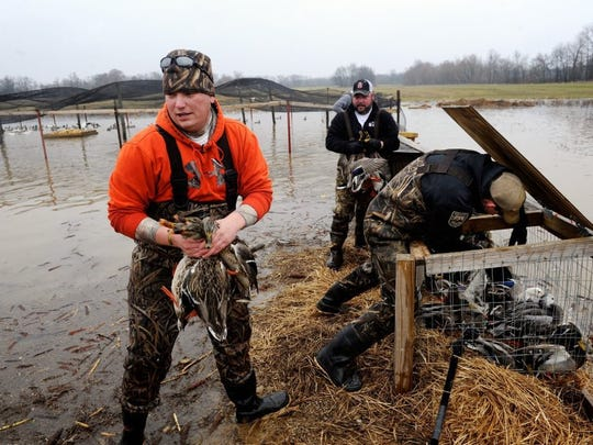 """Kentucky Department of Fish & Wildlife Resources employees, from left, Greg Buckert, Michael """"Catfish"""" Hutcheison and John Zimmer gather up ducks to be banded in the Henderson Sloughs in 2016. Data from the banding helps determine hunting limits and length of hunting seasons in managing waterfowl populations."""