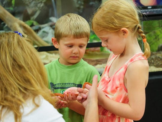 Volunteer Janice Coffey holds a Blood Red Corn snake for Colin Thole, 4, and his sister Kaitlyn Thole, 7, of St. Louis, so they can see up close at a past Reptile Roundup, presented in partnership with the Tri-State Herpetological Society at Wesselman Nature Preserve.