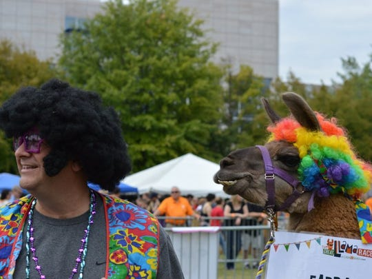 Brian Bruce and his running partner, Smiley, prepare to run Oct. 1, 2016, in The Great Llama Race at World's Fair Park. It was Bruce's first race with a llama.