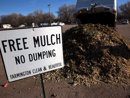 Free mulch from old Christmas trees is dumped by city of Farmington's Parks, Recreation and Cultural Affairs on Thursday at Berg Park.