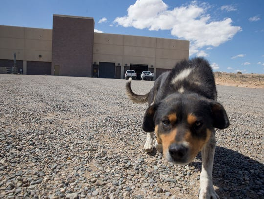 A dog walks near the Gallegos Pumping Plant on Monday at the Navajo Agricultural Products Industry site south of Farmington.