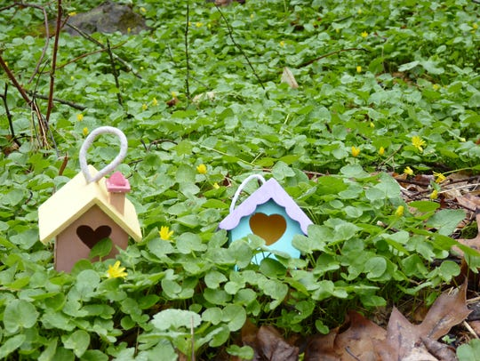 Gnome homes in a patch of forest growth on Columbia