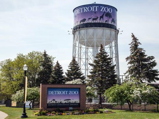 Detroit Zoo's beloved gray wolf dies from cardiac arrest