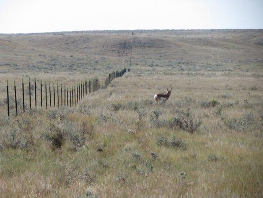 proghorn fencing