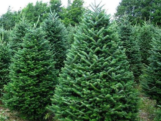 Christmas Tree Lane Sales Start Friday