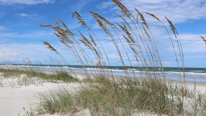 Anastasia State Park has miles of scenic, wide-open beaches are accessed by long, wooden walkways across towering sand dunes.