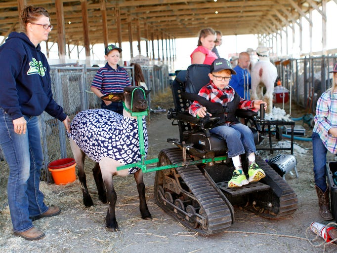 Braden Pederson, 10,  leads his sheep out of a barn