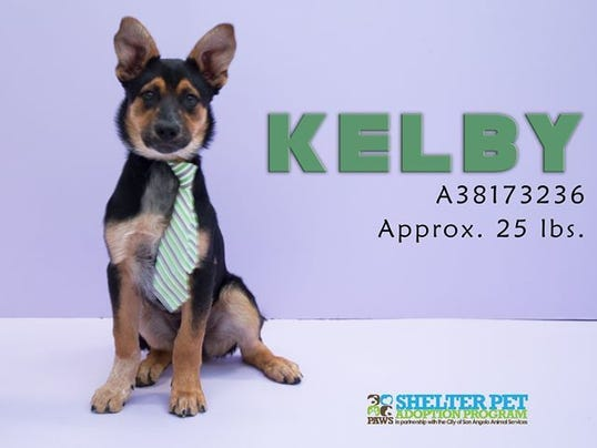 Kelby, Concho Valley PAWS