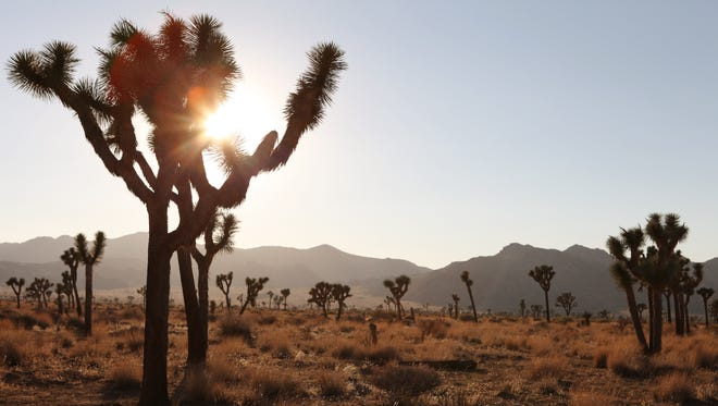 Joshua Tree National Park doesn't have any electric vehicle chargers.