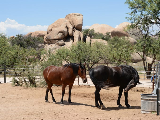 Horseback rides of one hour, two hours and more advanced