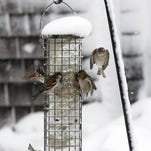Help birds sustain themselves in winter and provide entertainment and education for your family.
