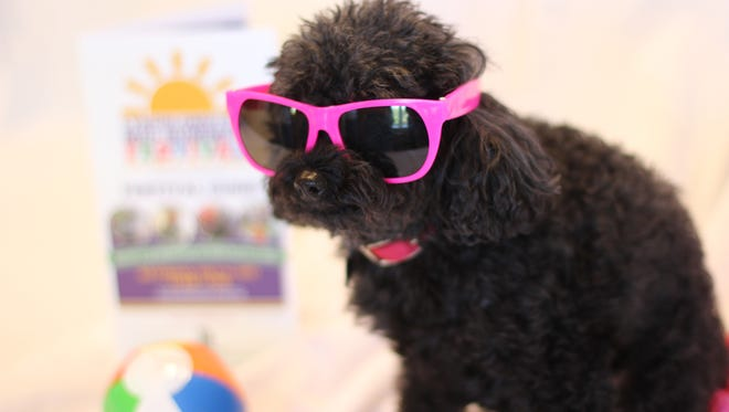 This 6-year-old poodle, named Nala, goes to work every day. Her job is to make people happy. She scurries around a senior living center in Minnesota and has captured everyone's hearts.