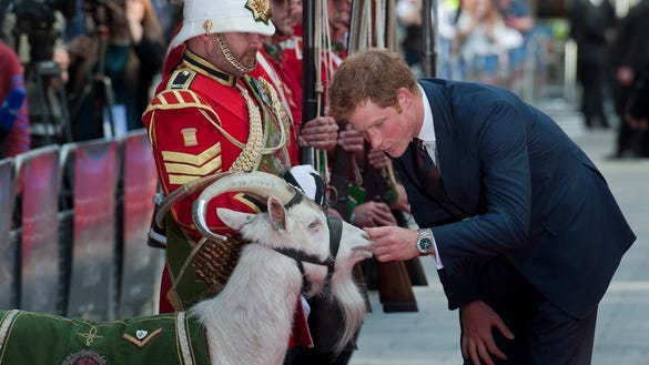 Prince Harry and goat