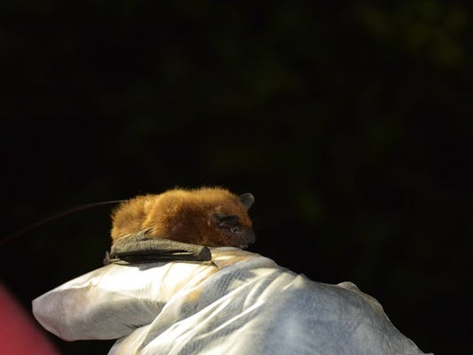 WSF-0916-outdoor-bats.jpg