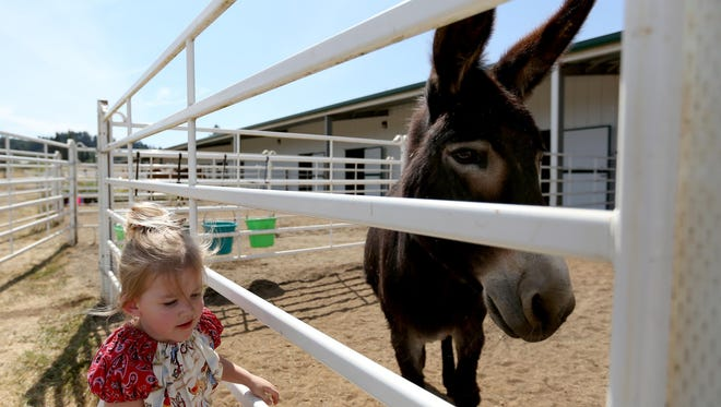 Katelynn Babcock, 3, of Albany, visits Ezyl, a therapy donkey, at the Horses of Hope Oregon open house in Turner on July 15.