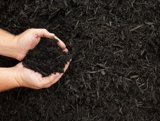 Mulch Stock Photo