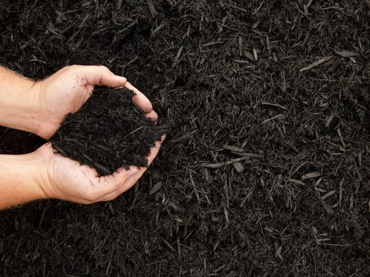 Hands displaying a handful of dark wood bark mulch.