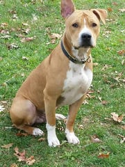 Willie is a 3-year-old terrier mix who came into the