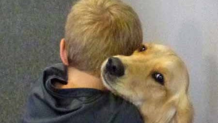 Jesse went through assistance dog training at Gentle Hearts Service Dogs and now belongs to a student with autism at Pieceful Solutions - Chander Campus. The charter school is for students with autism. The 18-month old Golden Retriever attends classes with the student and interacts with all students during recess.