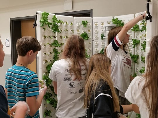 Students from St. John Lutheran School in Plymouth plant lettuce in a hydroponics system in the school's cafeteria.