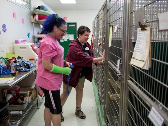 Volunteer Joanie Hickson and Director Katie Phelan close a pen after socializing several Norwegian buhund puppies Friday, June 17, 2016 at the Blue Water Area Humane Society, 6226 Lapeer Road in Clyde Township. The shelter was surrendered 6 of the 98 dogs taken from a Cottrellville Township home this week.