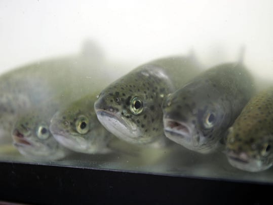 Deq head delays ruling on fish hatchery expansion for Fish hatchery michigan