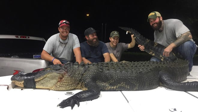 Alligator hunters Kenny Way, Casey Shields, John Booker and Nick Naylor pose with their trophy alligator.