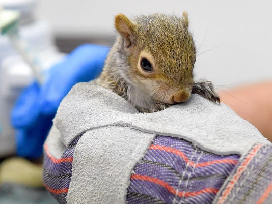 Babies at the Wildlife Center2