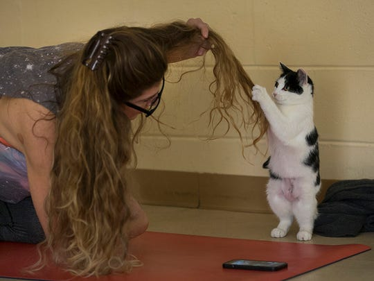 Toni Napolitano takes a moment away from instruction to play with one of the felines during  Kitty Cats  and Yoga Mats yoga session at the Monmouth County SPCA during which cats available for adoption are allowed to roam free and get to know the participants while they take a yoga class.