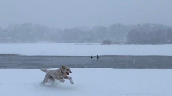 Henry sprints through a snowstorm at Memorial Park in Wausau on March 31.