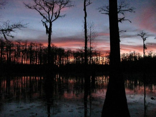 Cypress trees at Lake Lafayette in eastern Tallahassee. The city has a complicated relationship with trees