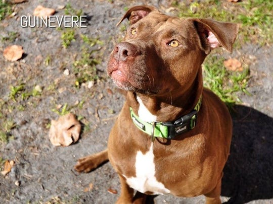 Guinevere ID#685508