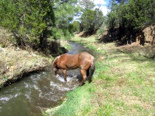 horse-in-stream