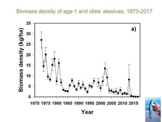 Biomass of adult alewife in Lake Michigan has declined