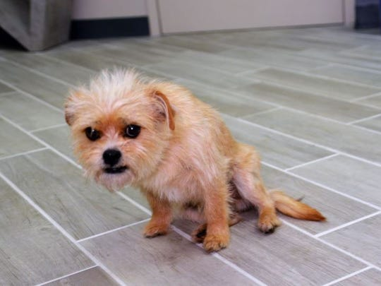 Oscar, a 3-year-old stray Terrier mix dog, suffered