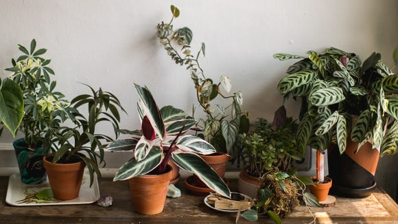 The 10 most popular plants on Amazon that you can't kill