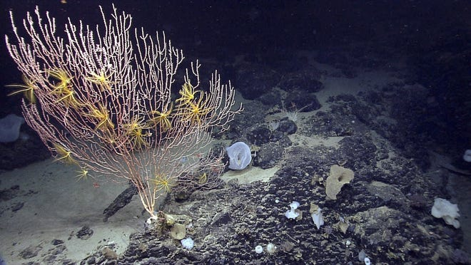 President Donald Trump announced Friday that federal protections granted the Northeast Canyons and Seamounts Marine National Monument will be overturned, thereby opening the area up to commercial fishing. But environmental groups say the president lacks the authority to remove protections approved by previous presidents under the Antiquities Act.