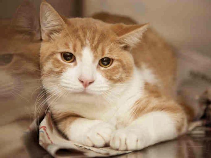 Cat Adoption Surprise Az