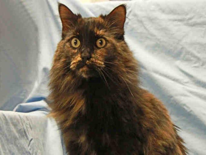 Larimer County Humane Society Cats