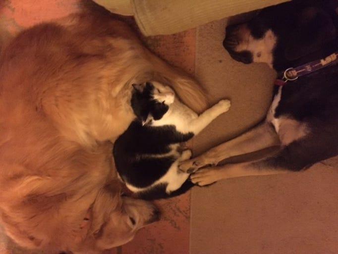 Just the three best friends! Golden retriever Angie,