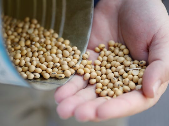 Matt Aultman, a grain salesman and feed nutritionist with Keller Grain & Feed, Inc., shows locally grown soybeans during an interview at their facilities in Greenville, Ohio, Thursday, April 5, 2018. Rural America is struggling under a cloud of uncertainty as the Trump administration escalates a trade dispute with China. The Republican president says he's simply fighting against unfair business practices with a geopolitical rival. But voters in rural America, those who fueled his 2016 presidential victory, say Trump's moves are threatening their livelihoods and forcing some to re-think their politics.