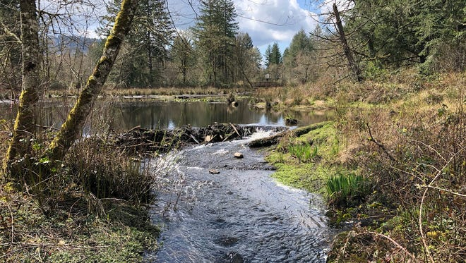 Water flows around a beaver dam at John  Neal Memorial Park.