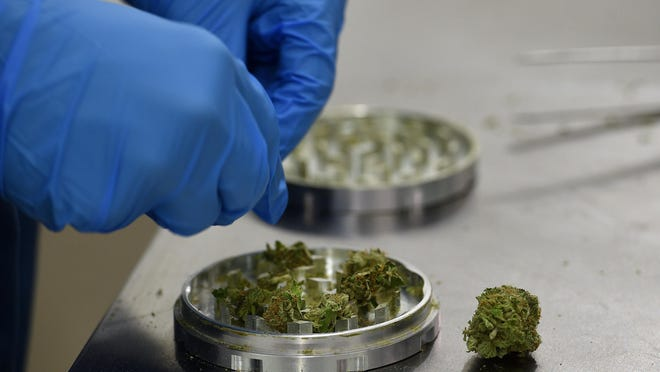 Shawn Tamborini prepares product to be rolled into joints at the Silver State Relief grow facility in Sparks.